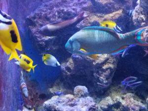 20160826_tropical-fish-2