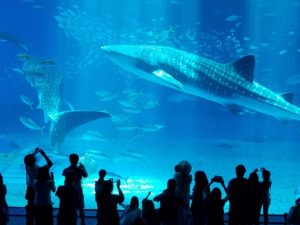 20160826_whale-shark-w-spectators
